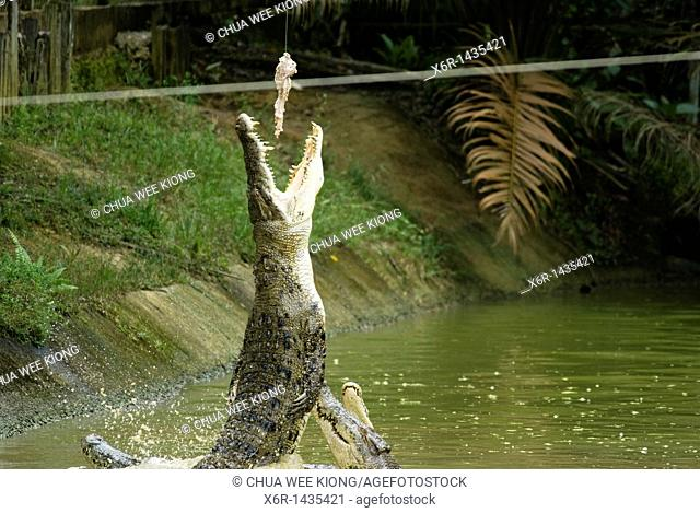 Jong's Crocodile Farm, Kuching Sarawak