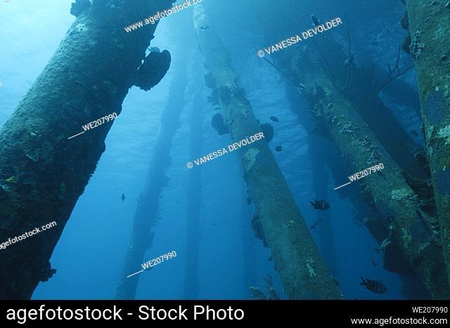Underwater fauna and flora in the Caribbean sea around Bonaire, Netherland Antilles. Divesite Salt Pier