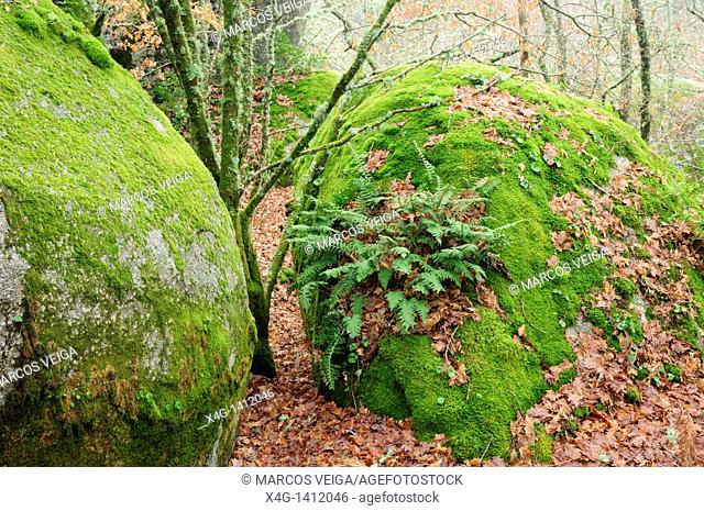 Granitic boulders and forest  Pena Corneira, Ourense, Galicia, Spain