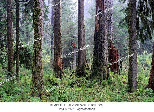 USA, Washington, Olympic National Park, Hoh Rainforest