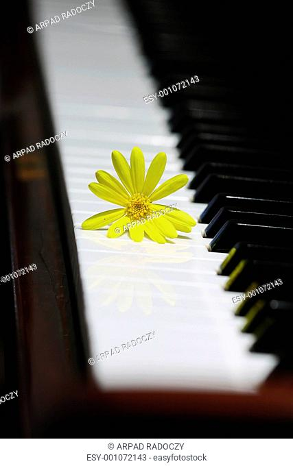 Harmonious detail of a black piano and a yellow flor