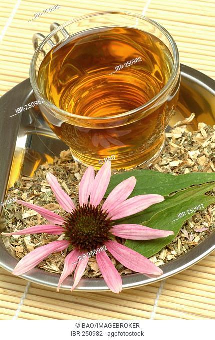Purple Conflower tea, Echinacea purpurea