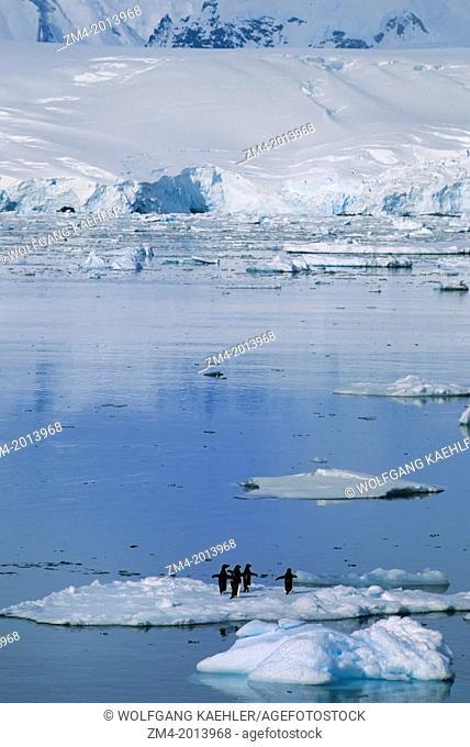 ANTARCTIC PENINSULA AREA, ADELIE PENGUINS ON ICEFLOE