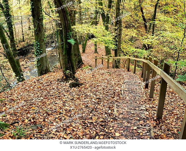Steps down the Bank at Souha Gill in Skipton Castle Woods in Autumn Skipton North Yorkshire England
