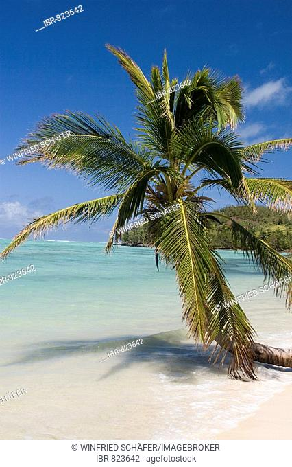 Palm tree on a beach, Nosy Nato, Madagascar, Africa