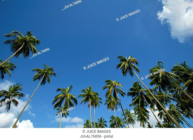 Low angle view of palm trees against blue sky, Barbados