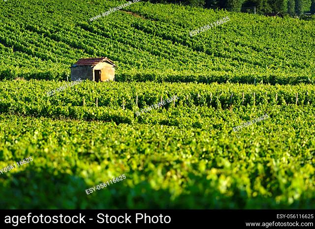 Hut in vineyards, Burgundy, France