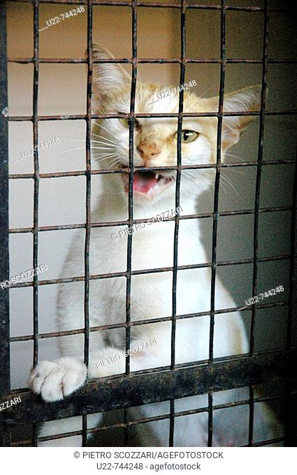 Assagao Goa, India, a cat recovering at the International Animal Rescue centre