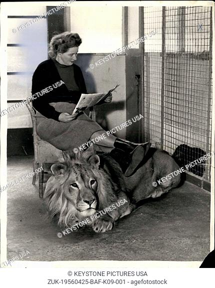 Apr. 25, 1956 - Rajah's as gentle as a puppy - and he's a lion: Ever thought what it would be like having a full-grown shaggy mained lion about the house? Well