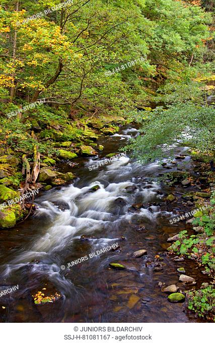 River Bode in autumn. Bode Gorge Nature Reserve, Saxony-Anhalt Germany