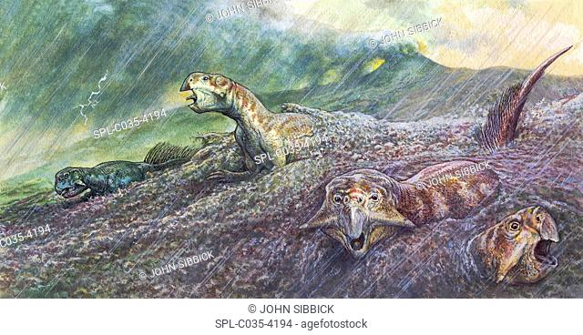 Psittacosaurus dinosaurs trapped in mudslide triggered by a volcanic eruption, illustration. Events such as this led to the formation of fossils that were...