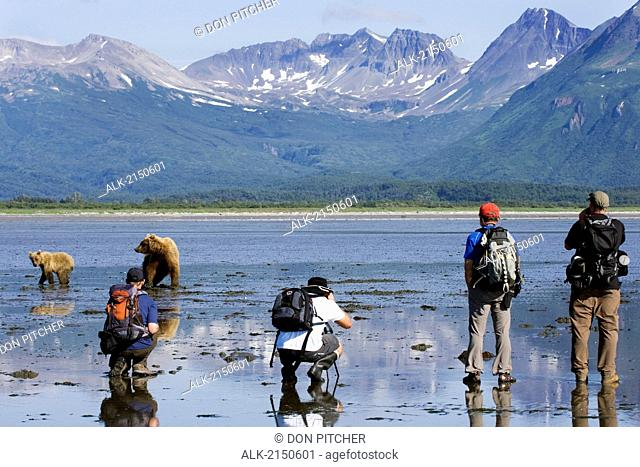 Group Of Photographers Photographing A Grizzly At Hallo Bay In The Kaguyak Area Of Katmai National Park, Alaska