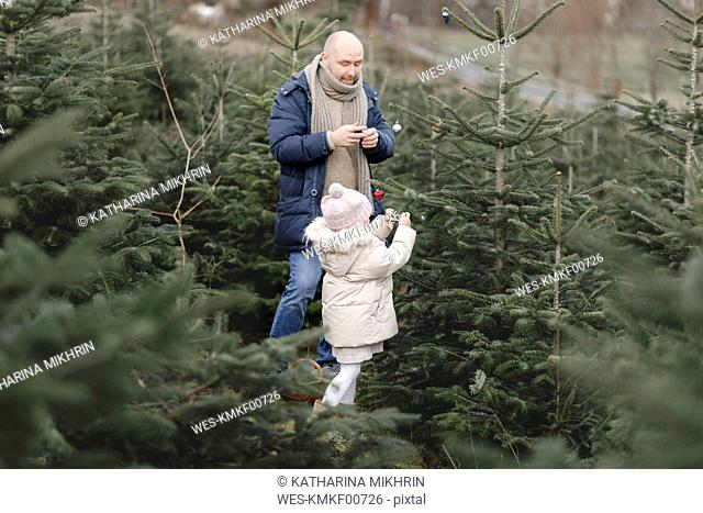 Father and daughter decorating Christmas tree on a plantation