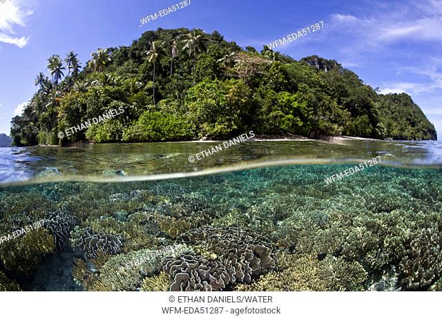 Corals grow in shallow Reef, Waigeo, Raja Ampat, West Papua, Indonesia