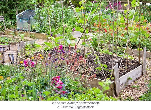 Timber raised beds planted with vegetables, flowers and herbs in traditional cottage garden Kent England