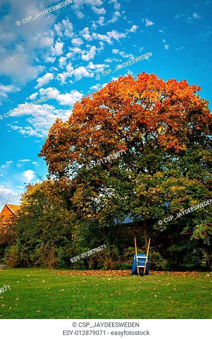 Time to rake the fall leaves