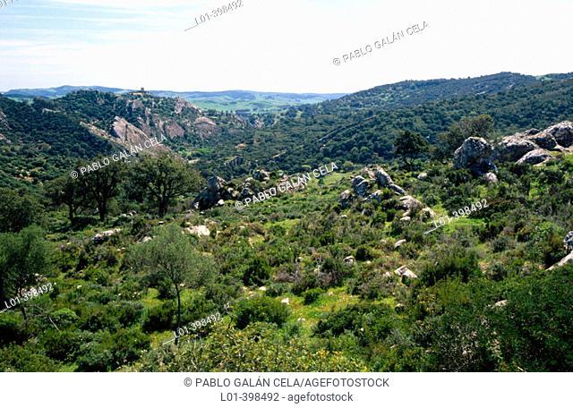 Parque Natural Los Alcornocales. Cádiz province. Andalucia. Spain
