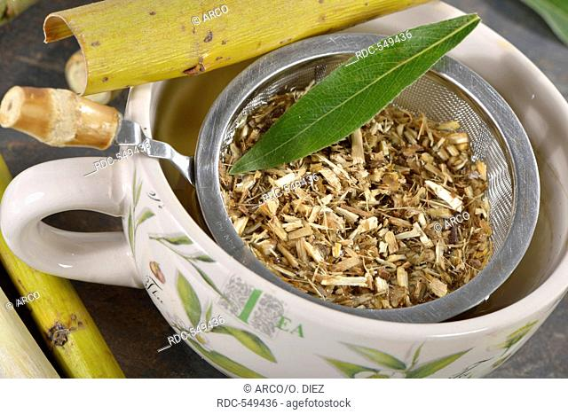 Willow bark tea / (Salix alba)