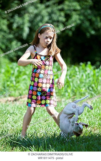 Young girl dropping a hunting dog puppy