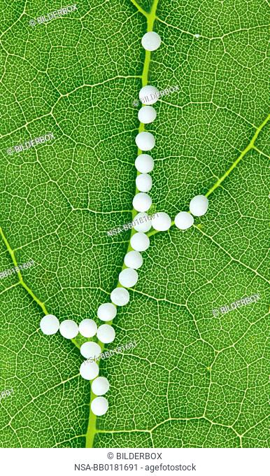 Globules in the treatment of diseases in the gentle, alternative medicine.Tablets and medicines