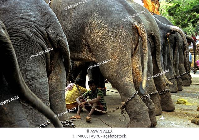 THRISSUR POORAM, KERALA, INDIA