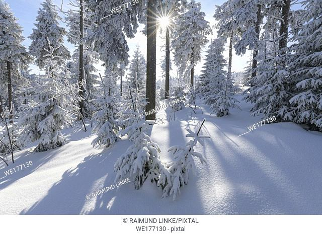 Snow covered winter forest with sun, Mount Fichtelberg, Oberwiesenthal, Erzgebirge, Ore Mountains, Saxony, Germany, Europe