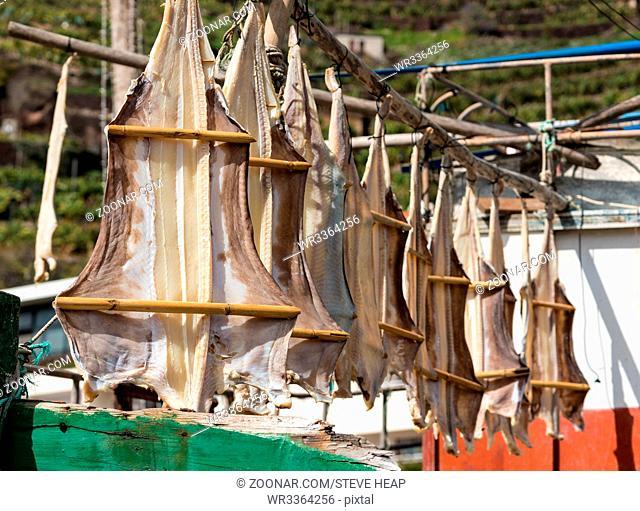 Cod Fish or Cat Fish drying on boat at Camara de Lobos on island of Madiera
