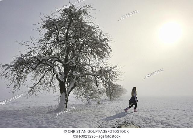 young girl walking beside apple trees covered with snow in the mist, department of Eure-et-Loir, Centre-Val-de-Loire region, France, Europe