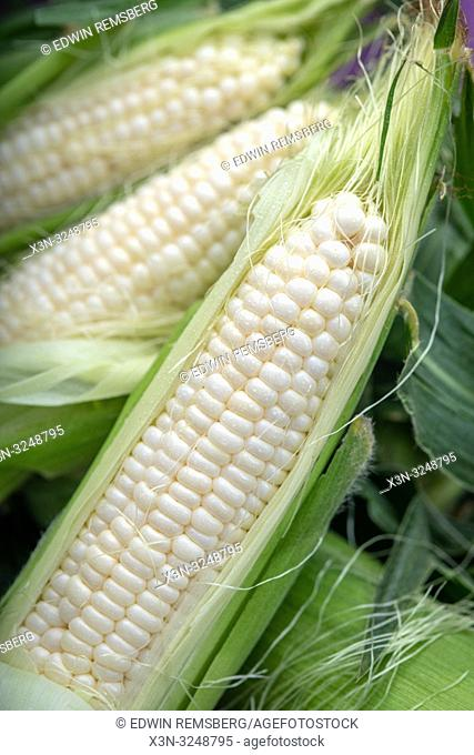 Close-up of ears of white corn (Zea mays) still in their husks for sale at farmers' market, Rehoboth Beach, Delaware