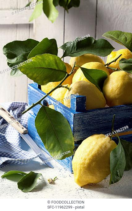 Fresh lemons with leave in a blue wooden crate