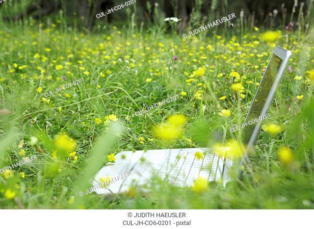 Laptop in flower meadow