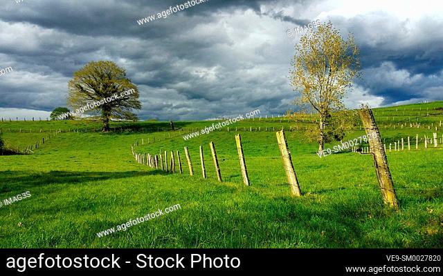 Meadows near Nava village, Asturias, Spain