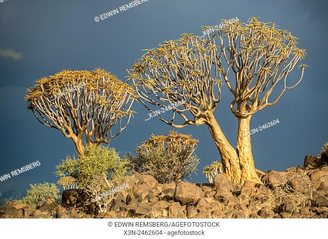 Keetmanshoop, Namibia - Quiver tree forest in the Playground of the Giants
