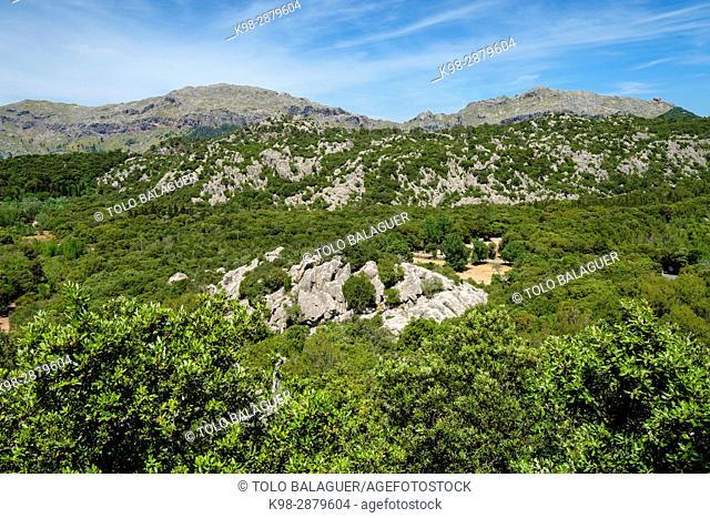 zona carstica del puig de ses Monges, valle de Lluc, Mallorca, balearic islands, spain, europe