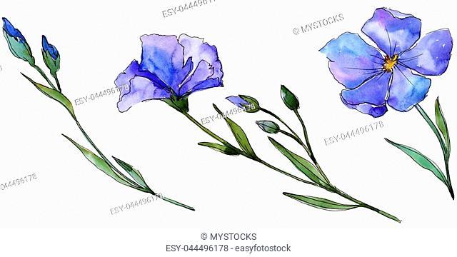 Blue flax. Floral botanical flower. Wild spring leaf wildflower isolated. Aquarelle wildflower for background, texture, wrapper pattern, frame or border