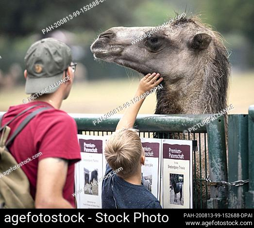 13 August 2020, Hessen, Kronberg: Visitors stroke a clumsy oaf at the Kronberg Opel Zoo. At a press conference here shortly afterwards
