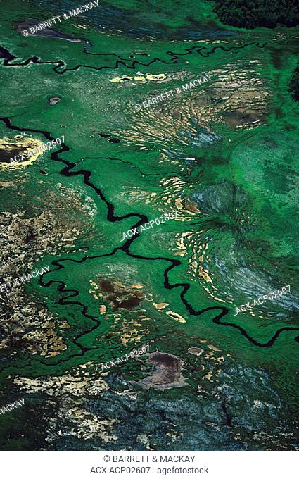 Aerial of Muskeg in Northern Ontario, Canada