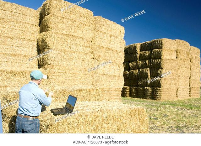 a man with a computer next to wheat straw bales, near Niverville, Manitoba, Canada