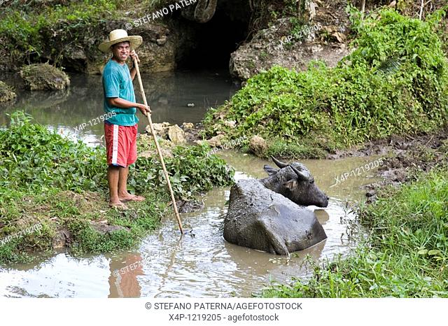 Farmer with his waterbuffalo. Central Visayas, Philippines