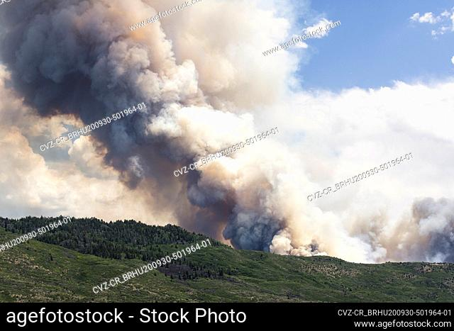 Smoke emitting from wildfire in forest