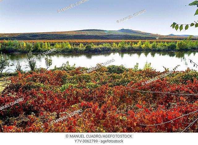 Autumn landscape. Vineyards in Briñas Area. La Rioja, Spain