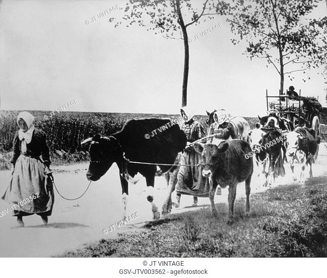 Peasants with Ox-Drawn Wagons, Soviet Union, 1930