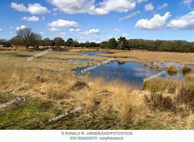 marsh in nature area Dwingelderveld, Netherlands