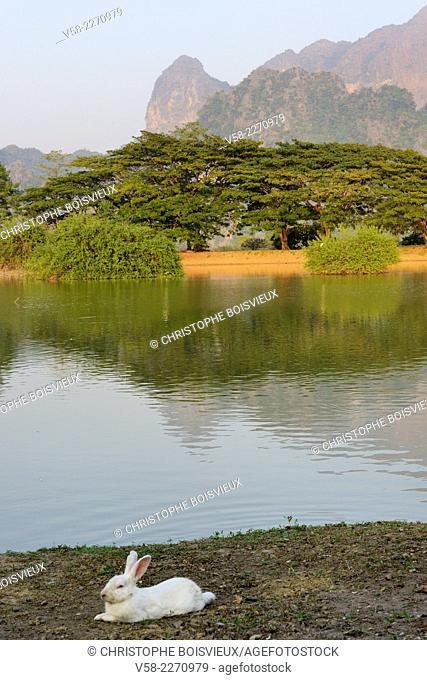 Myanmar, Kayin (Karen) State, Hpa-An, Surroundings of Kyauk Kalap pagoda, White rabbit