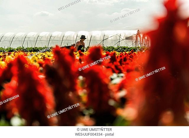 Woman working on field of flowers at a nursery