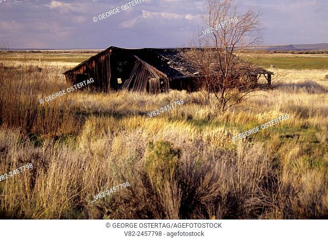 Old outbuilding, Frenchglen, Oregon