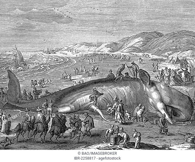 Dutch leaflet, image of a beached whale, 1598