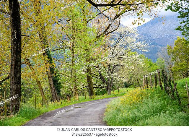 Entorno rural en Ramales de la Victoria. Cantabria. España. Europa