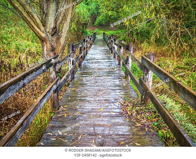 A wooden bridge crosses a wetland in the countrfyside. Cape Town, SOuth Africa