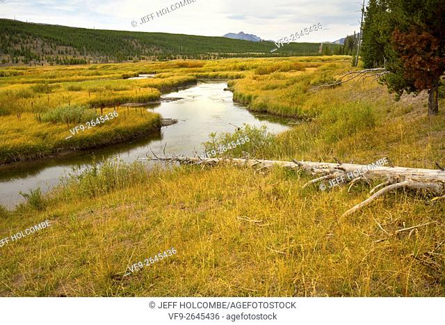 Grassy marsh wetlands along Indian Creek, with Mt. Holmes in the distance, in Yellowstone National Park, Wyoming